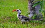 Bird Gambia 2
