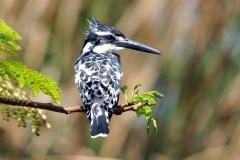Bird gambia 3